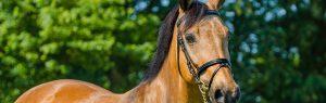 Bruin paard, Dierenkliniek Emmeloord