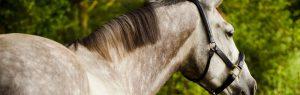 Paard, schimmel, Dierenkliniek Emmeloord