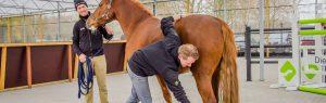 Dierenarts met paard