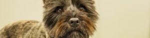 Close up van hond in de spreekkamer bij Dierenkliniek Emmeloord en Urk