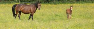 Mother and foal in a field, Dierenkliniek Emmeloord