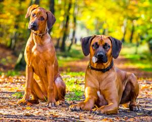 Honden in het bos, Dierenkliniek Emmeloord en Urk