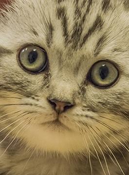 Cat Friendly Dierenkliniek Emmeloord