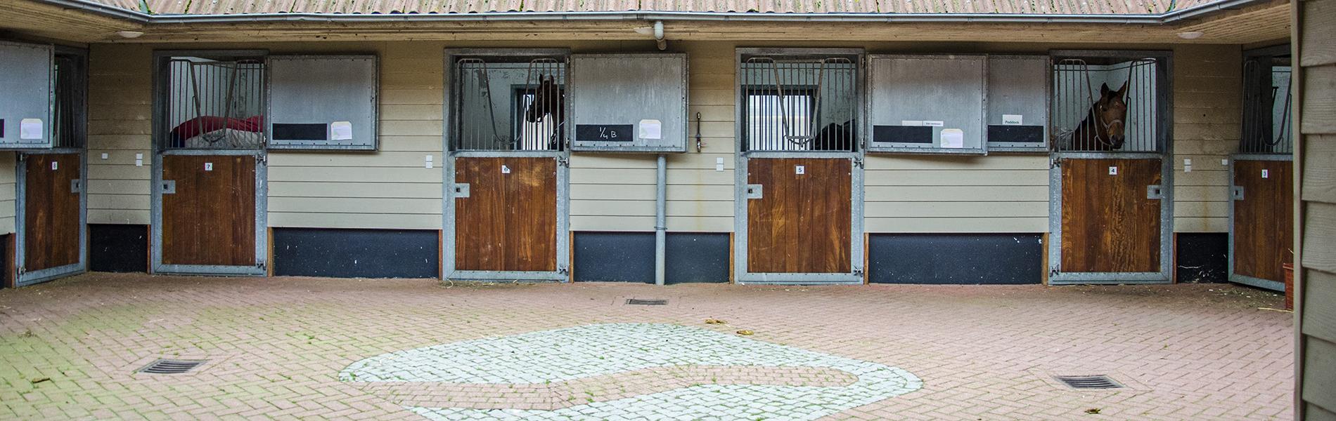 Artsen paardenkliniek